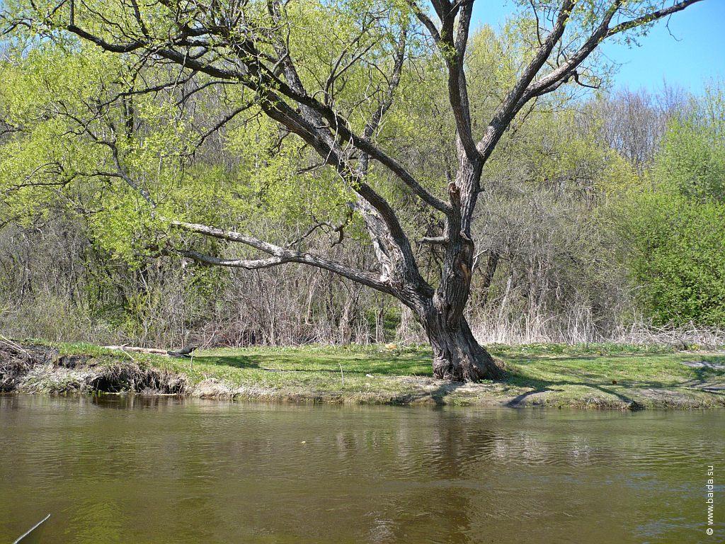 Поляна и дерево