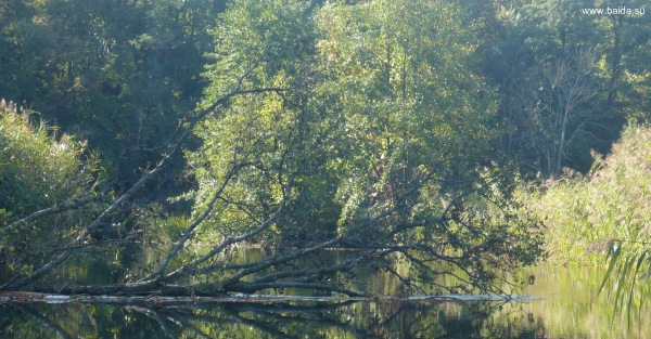 Дерево поперек реки
