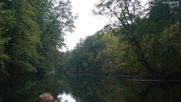 Умытый дождём лес