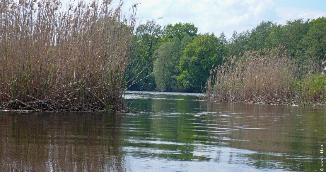 Устье реки Усманка