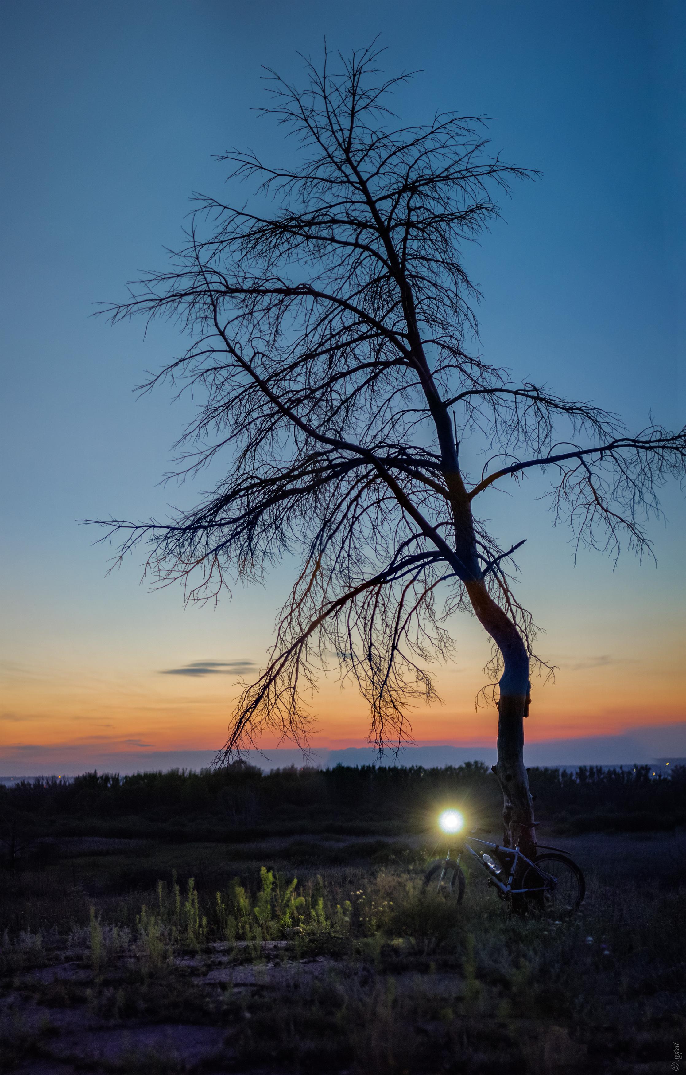 Панорама позднего вечера и моего верного друга