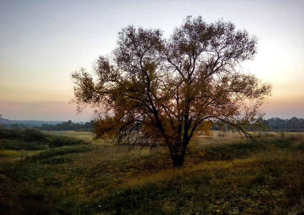 Дерево Любования